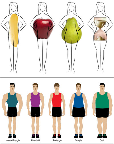 bodyshapes